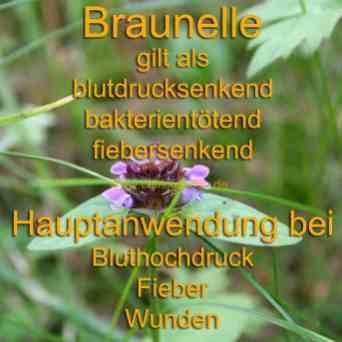 Steckbrief Braunelle