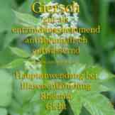 Steckbrief Giersch