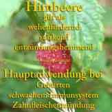 Himbeere Steckbrief