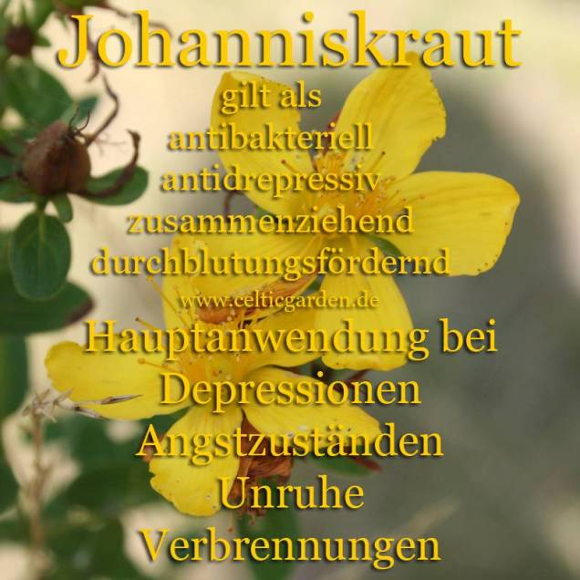 heilpflanze_johanniskrautkl