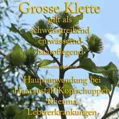 Steckbrief Klette