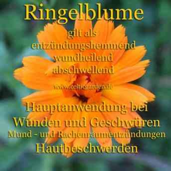 heilpflanze_ringelblumekl