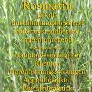 heilpflanze_rosmarin