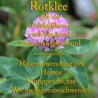 heilpflanze_rotklee