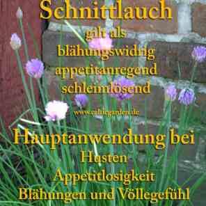 Steckbrief Schnittlauch