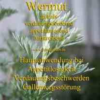 heilpflanze_wermutkl