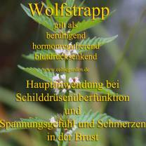 heilpflanze_wolfstrappkl