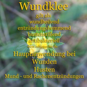 heilpflanze_wundkleekl