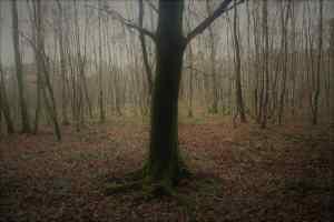 Bäume waren immer grosse Zauberpflanze