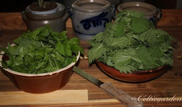 Brennessel-Giersch-Gemüse