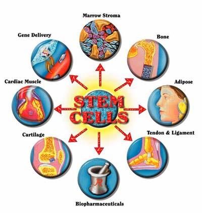 aplicaciones de las celulas madre