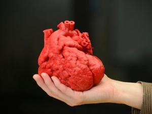 3B Yazdırılmış Kalp Modeli