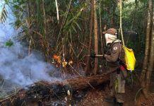 incêndios em florestas