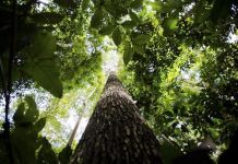 monitoramento da Amazônia