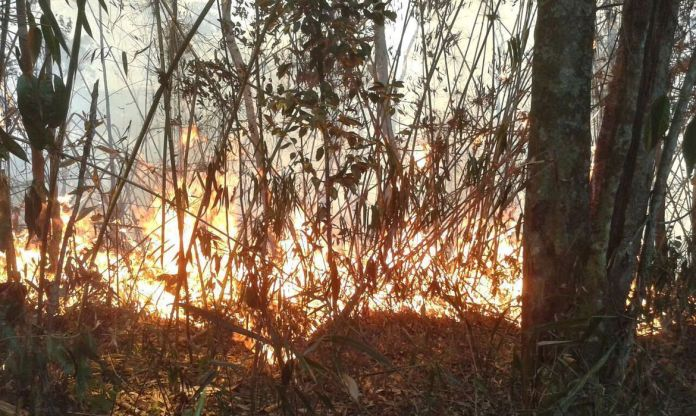 incêndio na Serra dos Órgãos