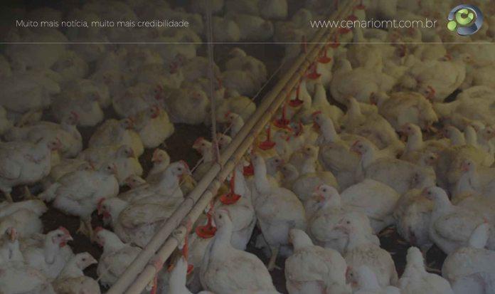 Abate de frangos
