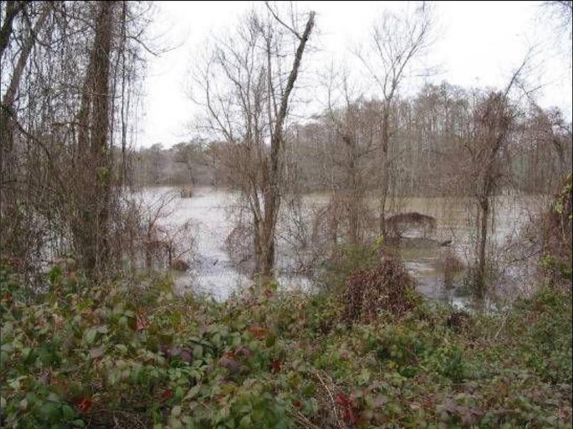 swamp_1439844845247.jpg