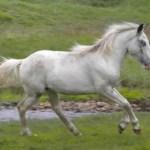 Meet Our Horses Spanish Mustangs