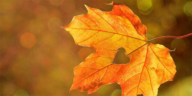 Efterårsblad