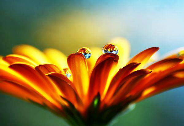 schitterende bloem