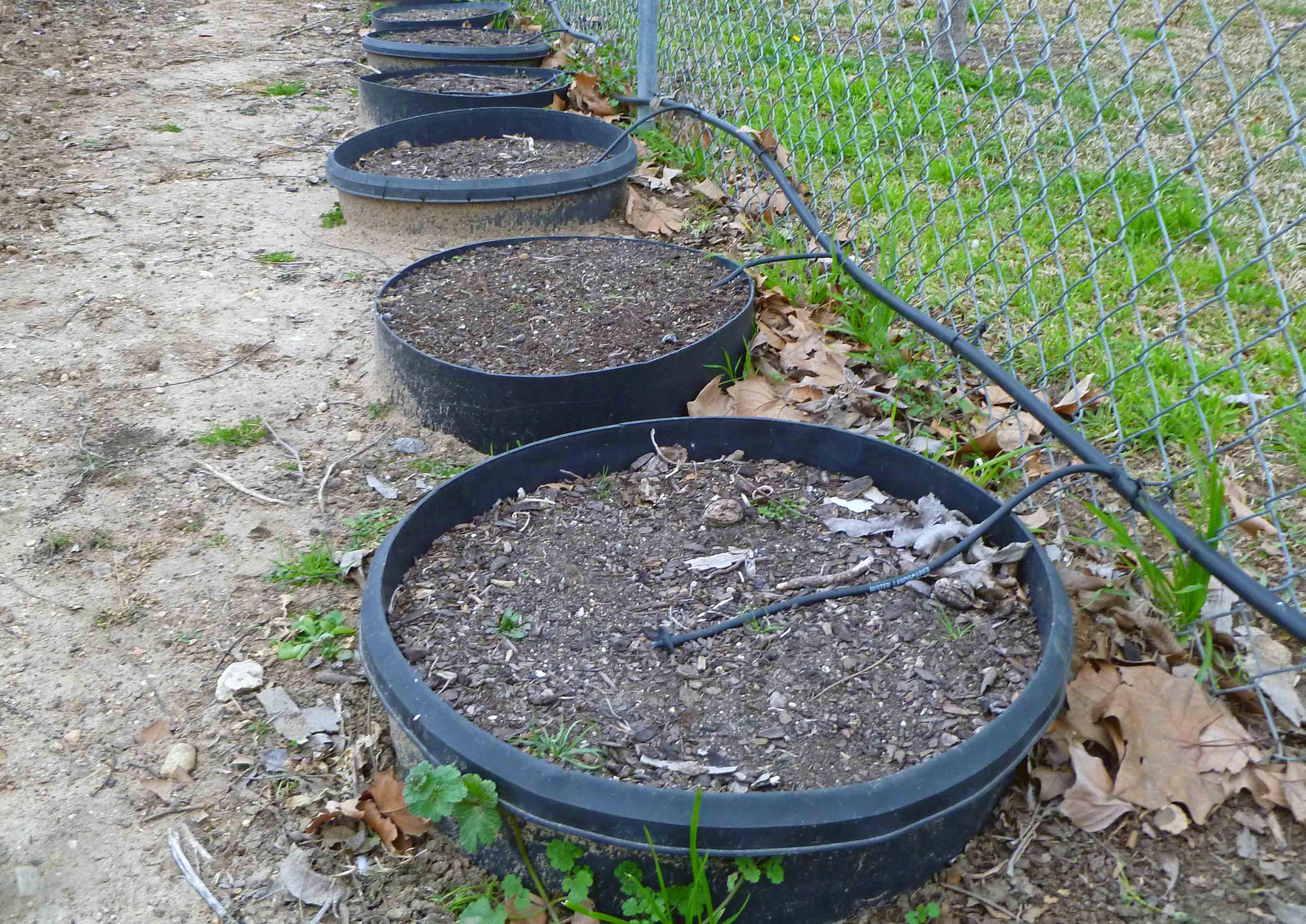 garden project for winter centex cooks