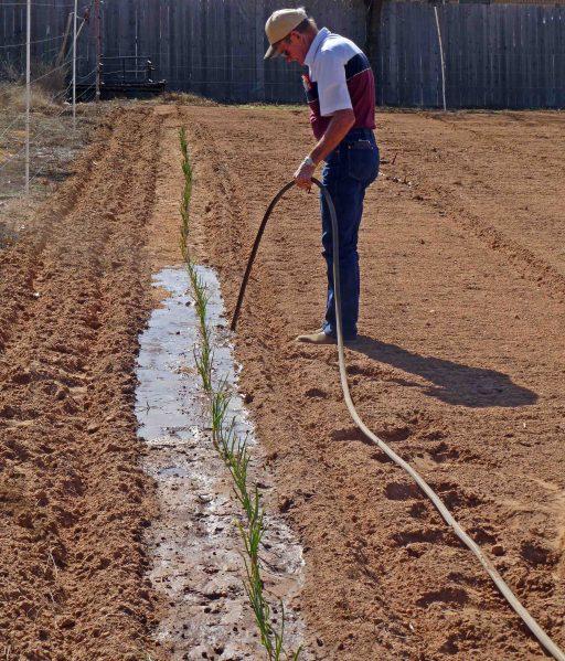 Planting Onions Raymond 2