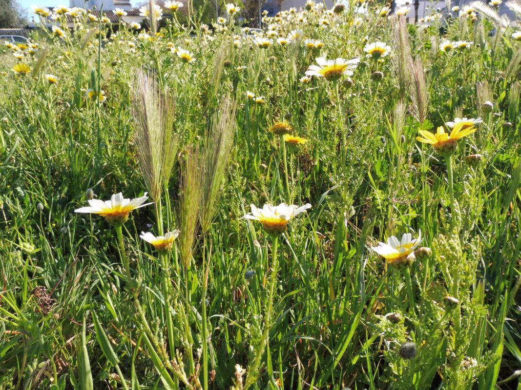 Al·lèrgies I Primavera: Com Hi Convivim? Com Milloram Els Seus Efectes?