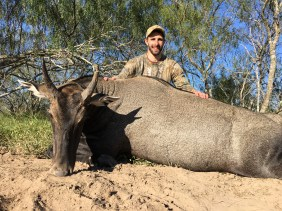 Nilgai Hunt | Raymondville, Texas with Wildlife Systems
