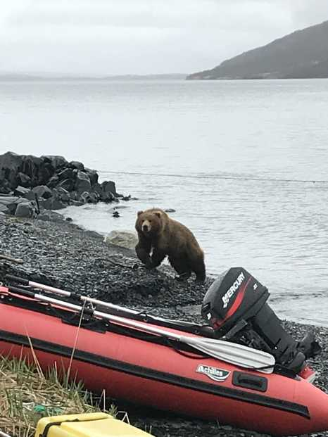 First Day in Bear Camp - Kodiak Island Olga Bay