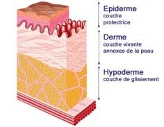 pelle-struttura
