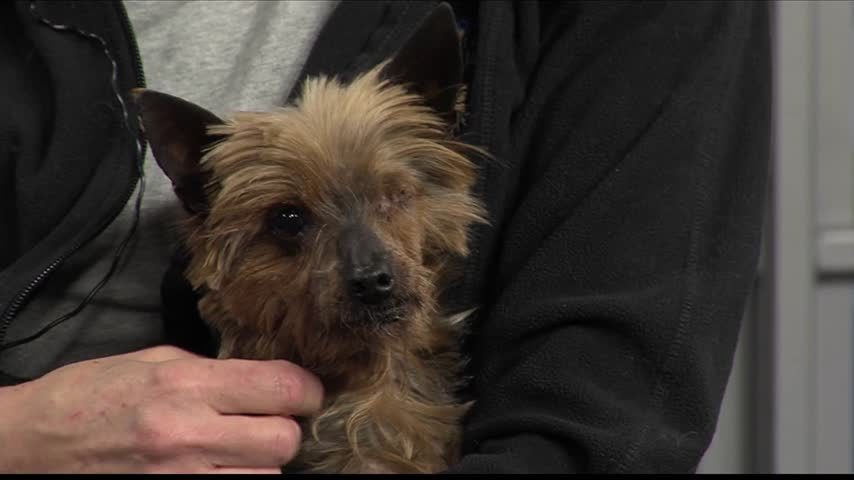 Pet of the Week- -Jerssi-_85441581-159532