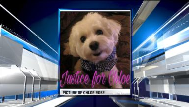 CHLOE ROSE THE DOG_1482206608306.PNG