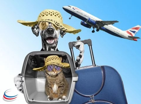 Emigrating-overseas-with-pets