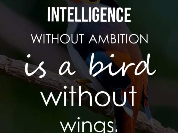 32 Inspiring Intelligence Quotes and Sayings