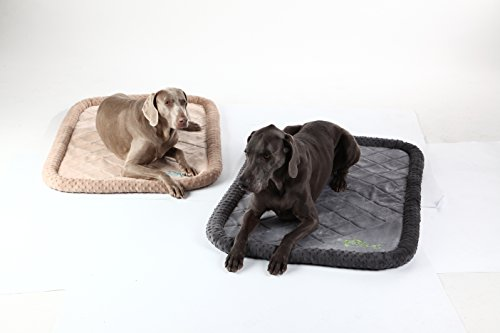 tough dog beds