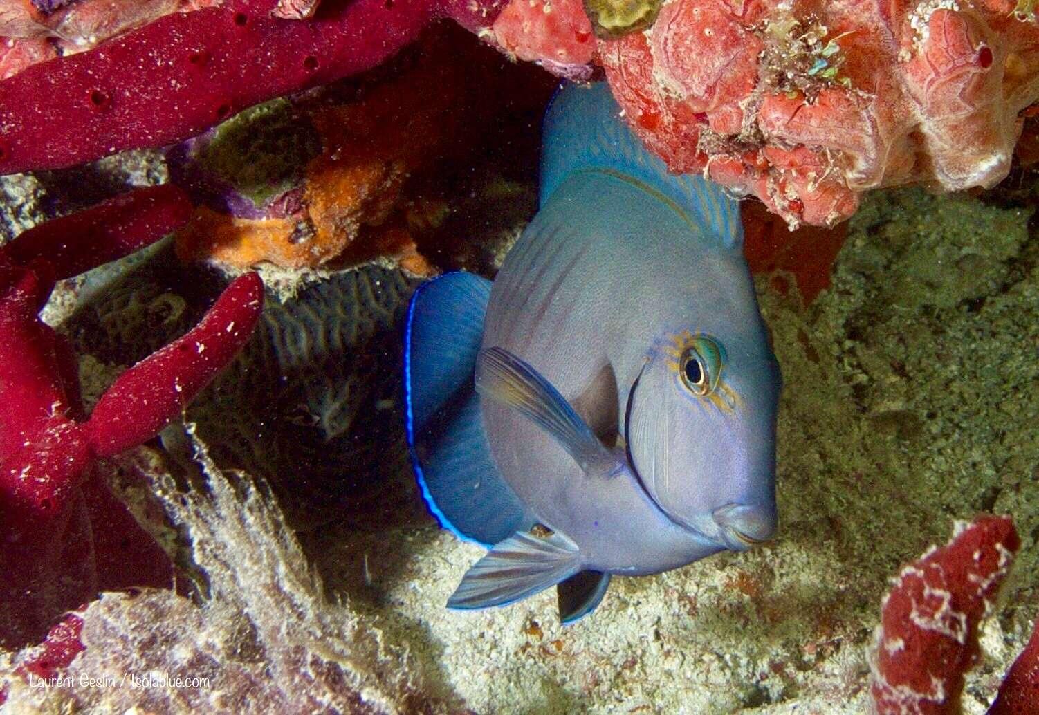 Image of ISOLABLUE yacht #11