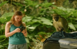 Students participate in primate research at the Barbados Wildlife Reserve in Saint Peter Parish, Barbados