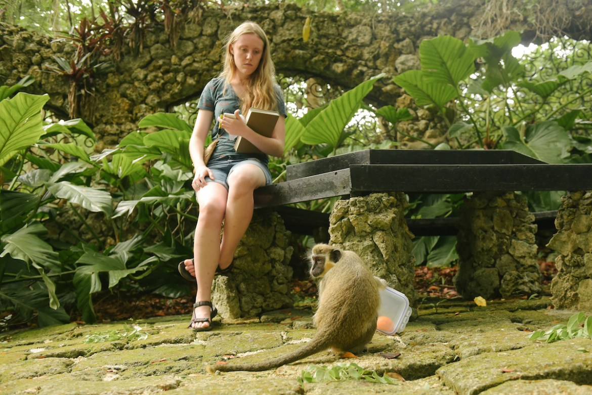 a student observing primate behavior in Barbados