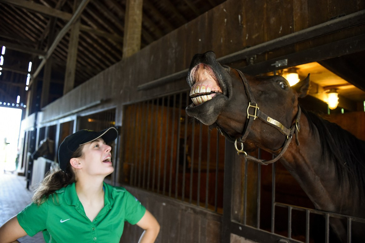 Cara Barnett '18 works with horses at an internship