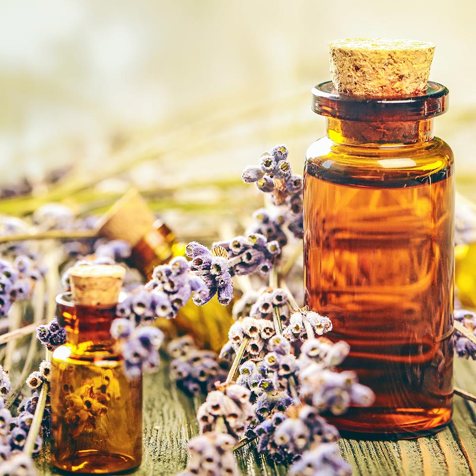 Bach Flower Remedies Diploma Course Centre Of Excellence
