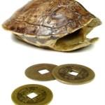 tortoise_shell
