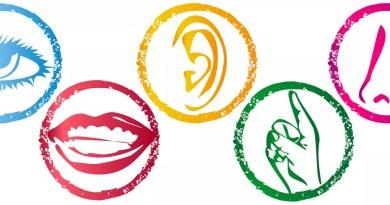 Sensi in gioco: come sostenere l'apprendimento a partire dall'esperienza sensoriale