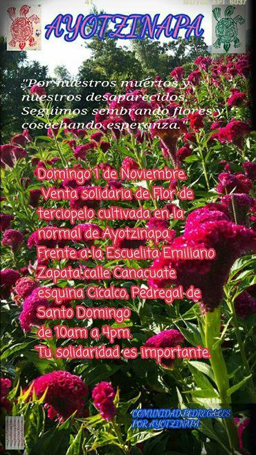 Flores de ayotzinapa en Santo Domingo 2