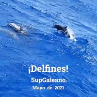 Comunicado zapatista: ¡Delfines!