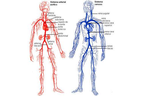 El Cuerpo Humano Con Sus Partes