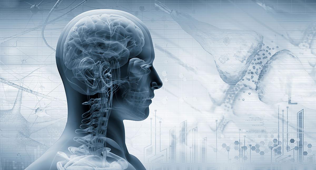 El-cerebro-humano-no-es-mas-eficiente-que-el-cerebro-de-otros-mamiferos.jpg?fit=1200%2C645&ssl=1