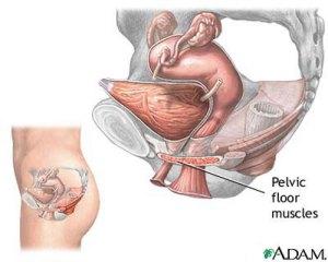 incontinenza urinaria pelvico