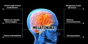 seno melatonina cervello ormone
