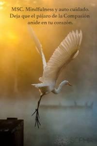 Charla gratuita: Mindfulness Self Compassion @ Fundación Sophia