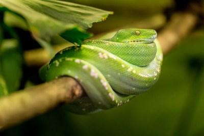 snake-1634293_1280